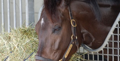 Take Charge Indy hanging out at Palm Meadows Training Center.