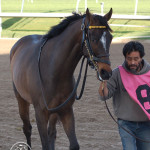 Amen Kitten before the 2013 Palm Beach Stakes at Gulfstream park on March 3, 2013.
