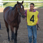 Dewey Square before the 2013 Palm Beach Stakes at Gulfstream park on March 3, 2013.