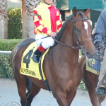 Dewey Square and Javier Castellano heading to the starting gate for the 2013 Palm Beach Stakes.