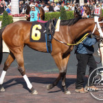 Lion Belle placed 2nd in race #7 at Gulfstream Park.