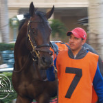 Quinzieme Monarque in the walking ring at Gulfstream Park before the 2013 Palm Beach Stakes.