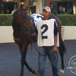 Squall King in the walking ring at Gulfstream Park before the 2013 Palm Beach Stakes.