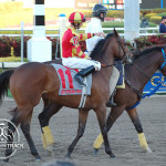 Summit County and Corey Lanerie Palm Beach Stakes 2013.