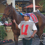 Summit County in the walking ring at Gulfstream Park before the 2013 Palm Beach Stakes.
