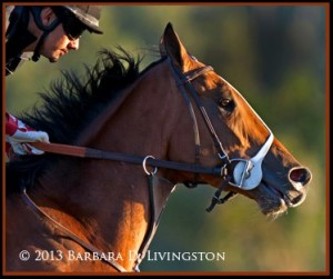 Goldencents is trained by world famous Doug O'Neill. PHOTO: Barbara Livingston