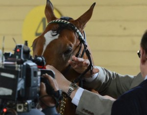 Goldencents loves the camera!