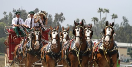 Ms. Racing Queen horses