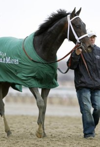 Revolutionary has been described as a happy playful horse with superior athleticism.