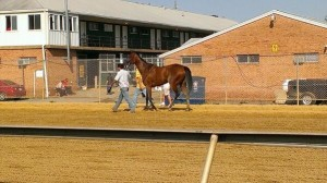 """Fiftyshadesofhay is reportedly """"bright and alert"""" after her 2013 Black-Eyed Susan win!"""