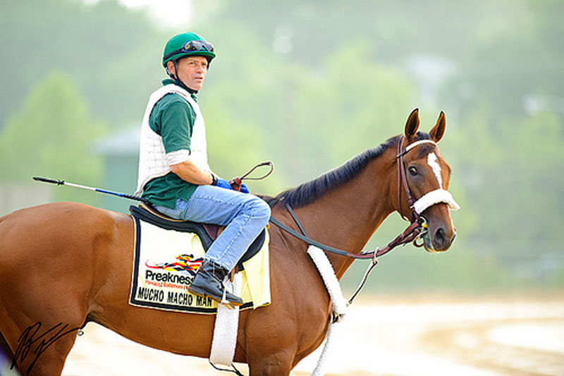 Mucho Macho Man Is Back For The Criminal Type Stakes