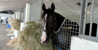 Jackson Bend Horse