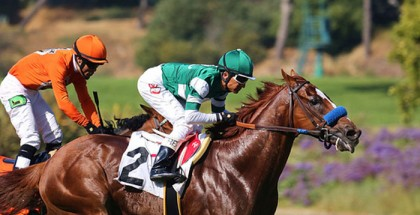 Vegabond Shoes Horse
