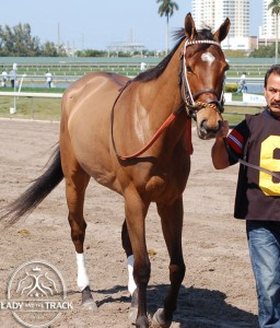Emollient Breeders' Cup Filly & Mare Turf Contender