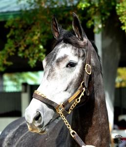 Silsita Horse