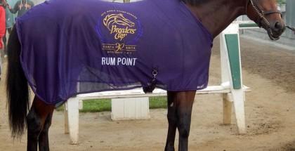 Rum Point Horse