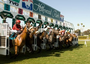 Hollywood Turf Cup 2013