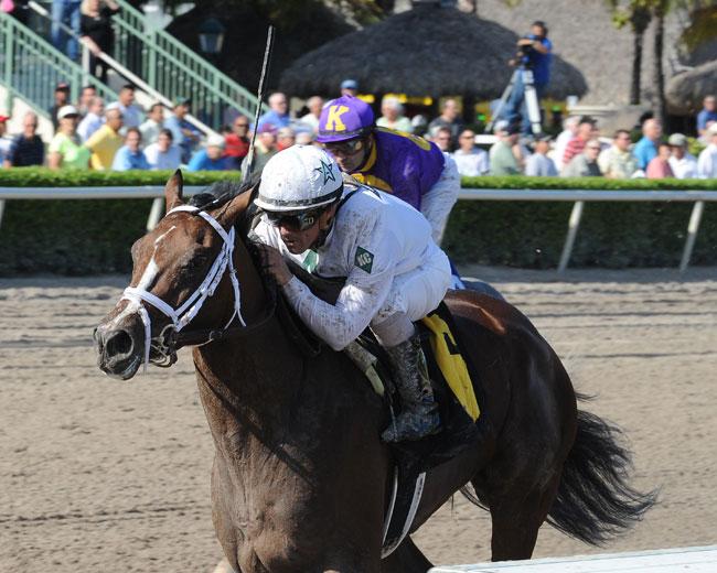 Constitution Horse
