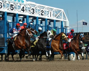Withers Stakes 2014