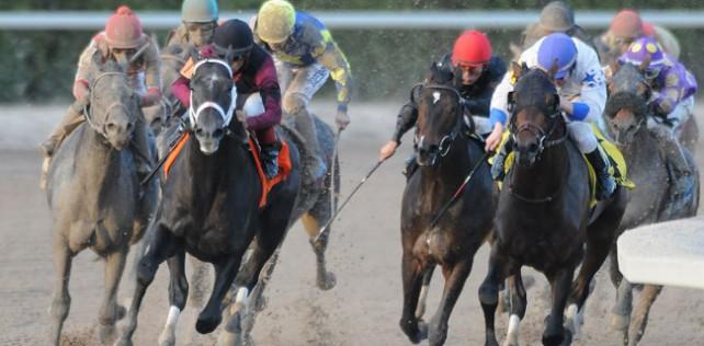 Cairo Prince Horse