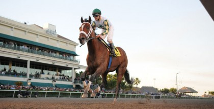 Mucho Macho Man 2014 Florida Sunshine Millions Classic Stakes