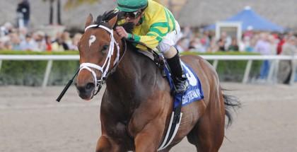 Onlyforyou Horse Forward Gal 2014