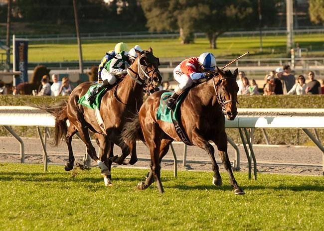 Winning Prize Horse