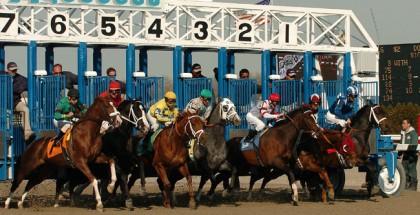 Gotham Stakes 2014