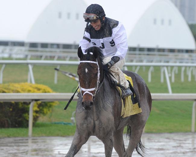 Got Lucky Horse John Velazquez