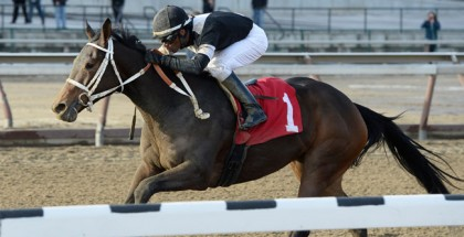 Joint Return Horse Busher Stakes