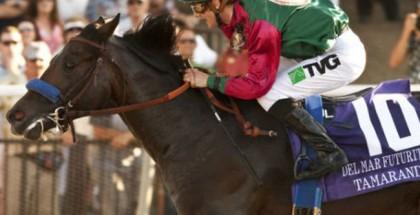 Tamarando Horse