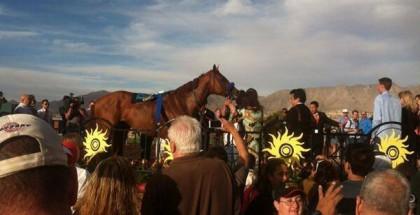 Chitu Horse