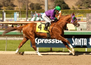 California Chrome Horse