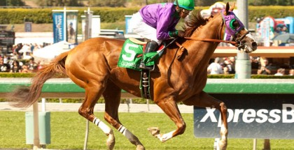 California Chrome Horse