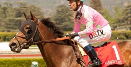 Fashion Plate Horse