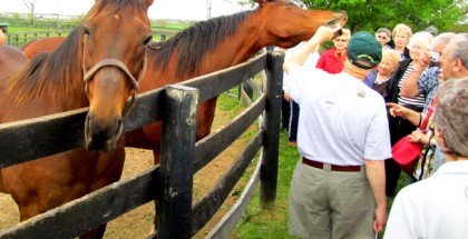 Old Friends Thoroughbred Retirement