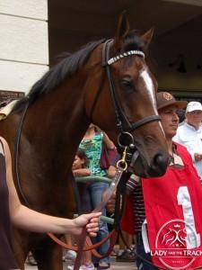 America Horse Bobby Flay