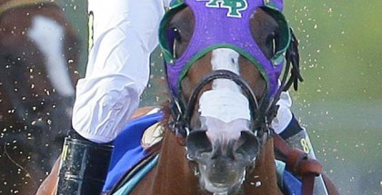 California Chrome Nasal Strip