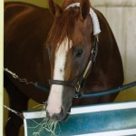 California Chrome Triple Crown 2014