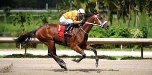 Tonito M. Horse