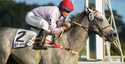 Sir Winsalot Horse