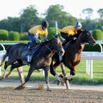Tonalist Belmont Stakes 2014