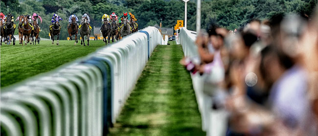 King George VI & Queen Elizabeth Stakes 2014 at Ascot
