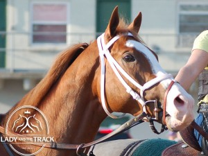 Will Take Charge Whitney 2014