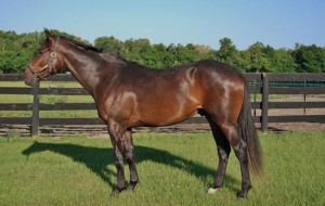 Two-year-old thoroughbreds