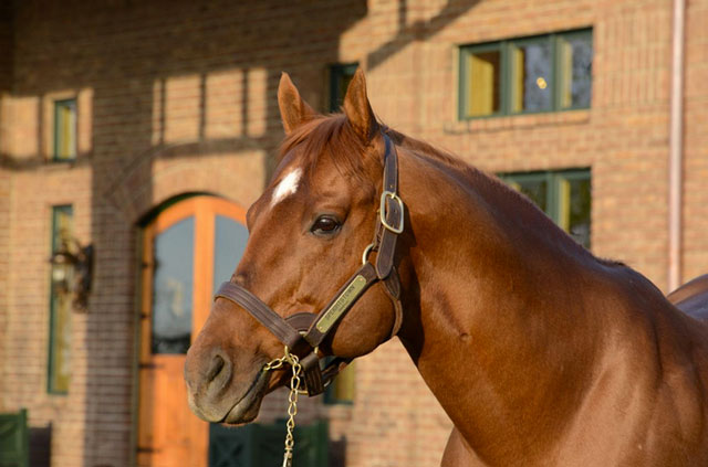 Speightstown A Quot Good Value Sire Quot For All