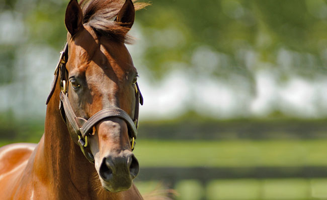 Stallion Feature Candy Ride Is A Sweet Deal For Breeders