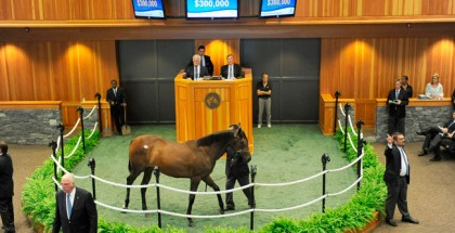 Recapping the Standouts of the New York Yearling Sale