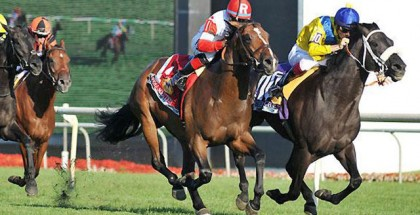 Arlington Million 2014 Odds