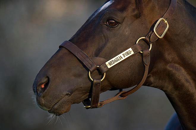 Stallion Feature Medaglia D Oro Is No Disappointment At Stud